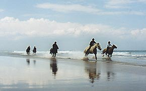 Beach rides with Kimmerston Riding Centre